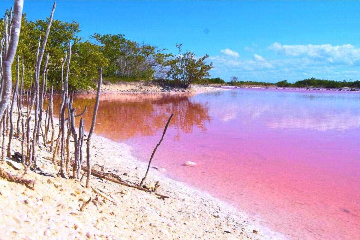 12 Stunning Pink Lakes in the World You Didn't Know Existed 1